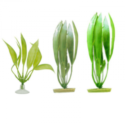 Planta Amazon Sword Para...